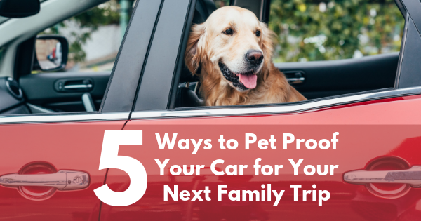 5 Ways to Pet-Proof Your Car for Your Next Family Trip